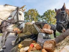 Paarden en pony's aan het ontbijt voor Vollenhoofse toertocht
