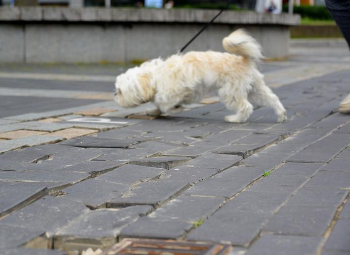 Zo liggen de stenen er bij op het Ameideplein in Helmond