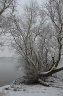 Een besneeuwde boom in Tolkamer