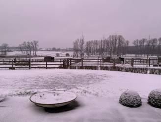 FOTOREEKS: Genieten van de sneeuw in Erpe-Mere