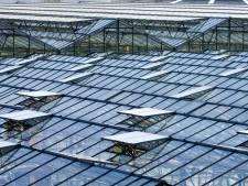 Discussiëren over areaal glas in Westland: 'Moeten we krampachtig vasthouden aan hectares kassen?'