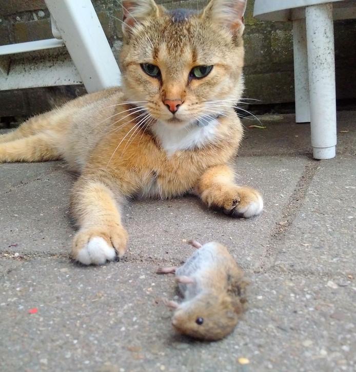 Ja. Mijn muisje