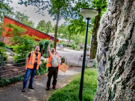 Jeukrupsenplaag Apeldoorn loopt uit de hand: 'We pakken nu alleen de schoolpleinen nog aan'