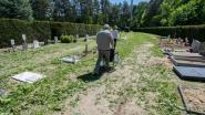 """""""Laat verenigingen onkruid wieden op kerkhoven en zo geld verdienen"""": opmerkelijk voorstel in beleidsplan Maasmechelen"""