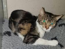 Aangereden kat met blauw halsbandje zit zonder baasje