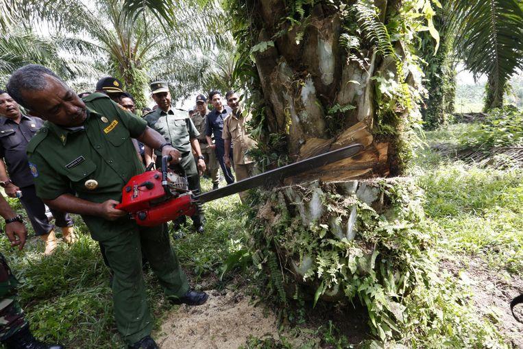De politie haalt een illegale palmolieplantage neer op het Indonesische eiland Sumatra. Beeld EPA