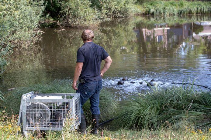 Een medewerker van het waterschap plaatst een zuurstofpomp om te voorkomen dat de overgebleven vissen ook komen te overlijden.