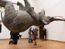 Mysterie van de zwevende olifant in Kunsthal KAdE