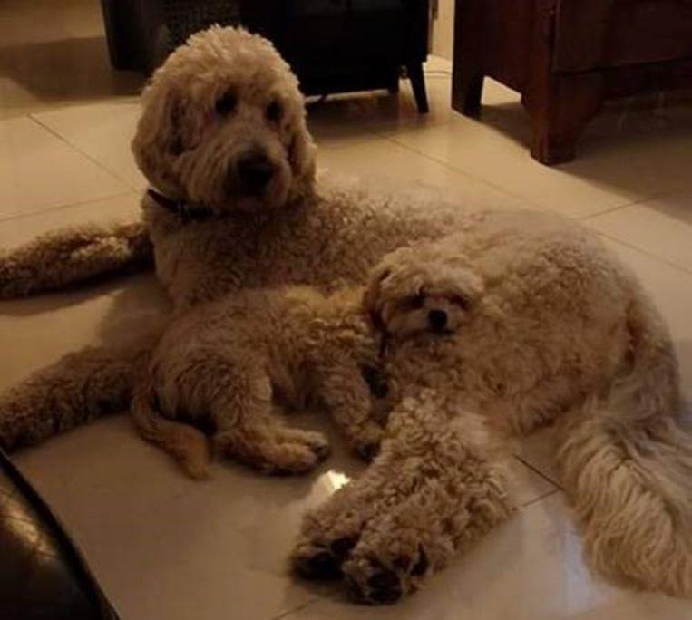 Adoptiehond Lou'ke met zijn nieuwe 'grote broer'