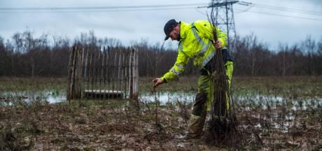 """Scholen planten 3.800 bomen en struiken naast R4: """"Het wordt een klimaatrobuust bos"""""""