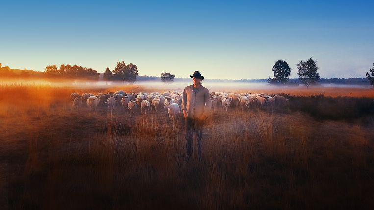 Schaapsherder Stijn in de documentaire Sheep Hero Beeld Ton van Zantvoort