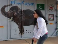 """L'éléphant """"le plus solitaire du monde"""" accueilli par la chanteuse Cher au Cambodge"""