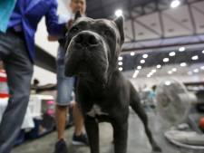 'Na Amsterdam hopelijk in heel Nederland verbod op hondenshows'