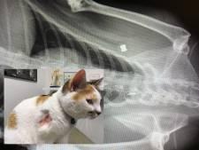 Kat beschoten met luchtbuks in Helmond, 'Pip kwam bloedend binnen'