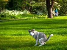Ondanks handtekeningen wordt hondenuitrenplaats toch opgedoekt