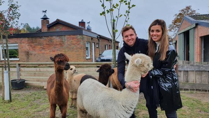 """Ken en Karen openen 'Epic Alpaca Farm' in Meer: """"Die dieren zorgen voor enorm veel rust, echt zalig"""""""