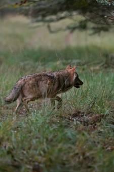 Nieuws gemist? Tieners betrapt met drank en 'wapens' en waarom krijgen wolven geen naam? Dit en meer in jouw overzicht