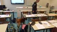 Drugshond zoekt naar verdovende middelen in Arendonkse scholen