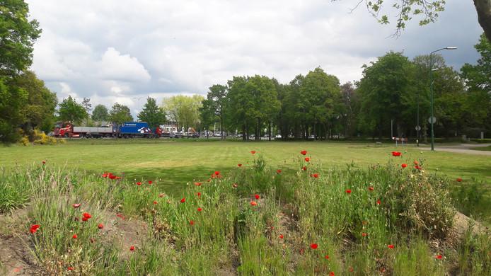 Het grasveld bij de provincialeweg dat deel uitmaakt van het gebied  Egyptische Poort in Bladel.