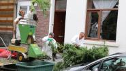 1.800 cannabisplanten vernietigd bij ontmanteling van twee plantages op enkele uren tijd