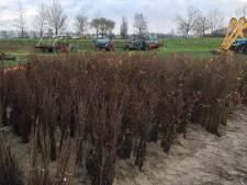 3,8 hectare nieuw bos in De Rampert