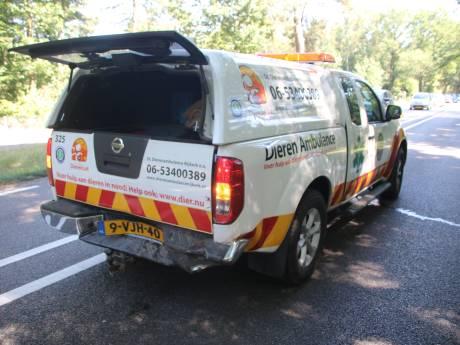 Medewerkster Dieren Ambulance zwaargewond na botsing bij Ermelo: 'Ze remden niet en reden vol op ons in'