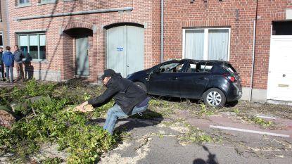 """Oppositiepartij 'Puur' na de hevige rukwinden van vorige week: """"Laat ook vrijwilligers helpen bij zware stormschade of wateroverlast"""""""