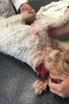 Muilkorf voor hond die blinde Milou aanviel in Zwolle