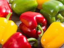 Wat gebeurt er in een kas? Komkommers en paprika's zien groeien en eten in nieuw centrum