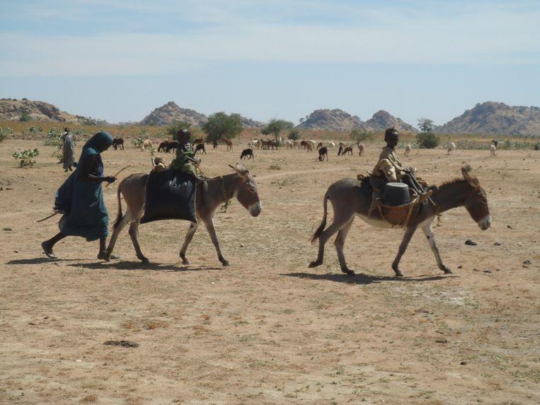 De ezels lopen gewoon over de landingsbaan in Afrika.