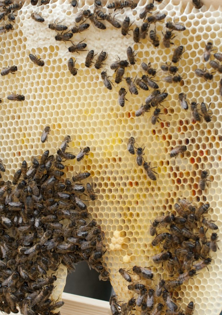 Een raam met bijen. Beeld Melissa Peen