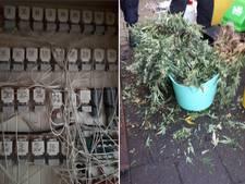 Politie vindt 1500 wietplanten in Lelystadse woonwijken
