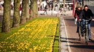 Het wordt écht lente! Zonnig en droog, met temperaturen tot 15 graden
