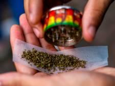 """""""La France doit légaliser le cannabis. La répression est un échec complet"""""""
