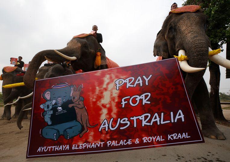 De olifanten houden tijdens de optocht pancartes omhoog met daarop een afbeelding van een olifant knuffelend met een kangoeroe en een koala.