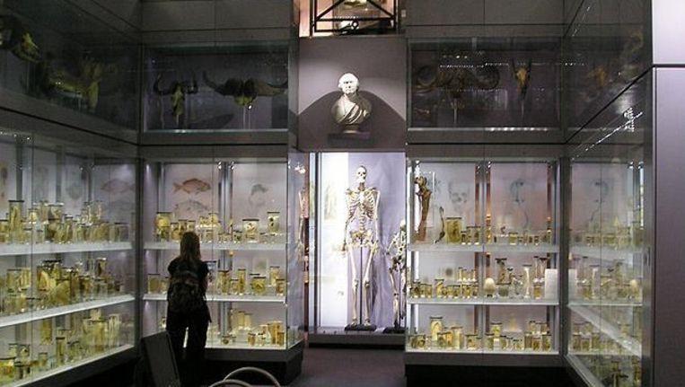 Charles Byrne in het Hunterian Museum in Londen. ©StoneColdCrazy at en.wikipedia Beeld