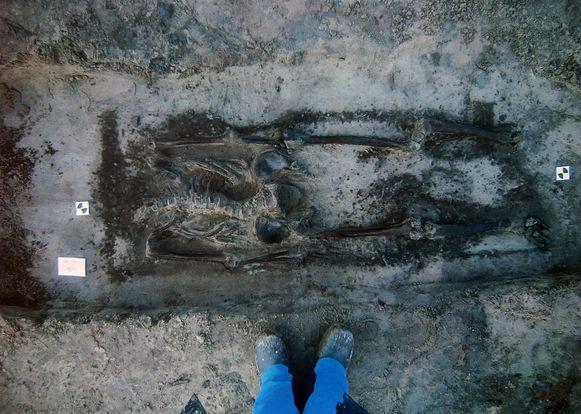 Onder andere dit skelet werd opgegraven.