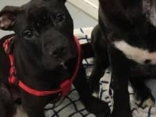 Pup met gebroken poot gedumpt in Rotterdam-Zuid: 'Hij heeft veel pijn'