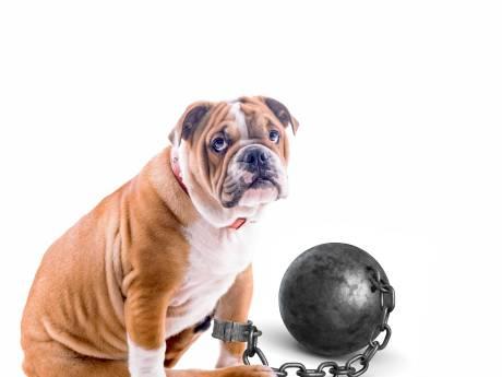 Burgemeester Bruls wil huisarrest voor gevaarlijke honden in Nijmegen