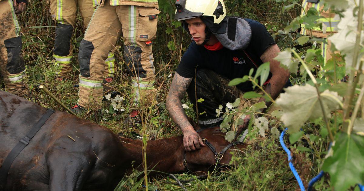 """Brandweer redt hengst 'Cas' uit gracht op werelddierendag: """"Hij had niet veel langer in het koude wat...."""