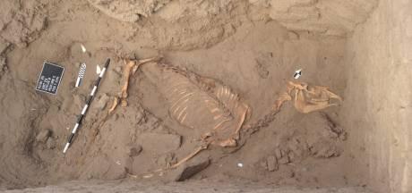 Leidse archeologe ontdekt 3.000 jaar oud paardengraf in Soedan