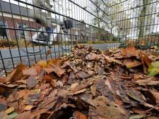 Gemeente Hengelo ziet plaatsen van bladkorven niet zitten