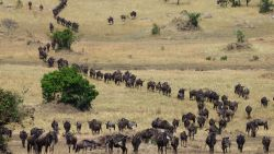 Bevolkingsgroei zet Afrikaanse reservaten onder druk