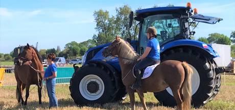 Campagne Zeeuws-Vlaamse ruiters: Rij bedaard langs een paard