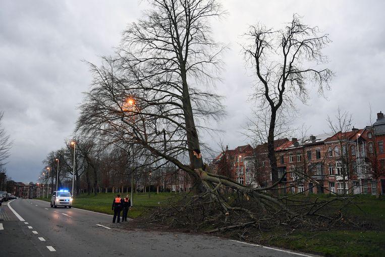 stormschade in de regio Leuven.Naamsevest in Leuven.