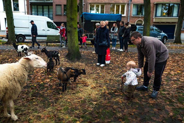 Ouders met kinderen komen beestjes bekijken op het Sint-Hubertusplein.