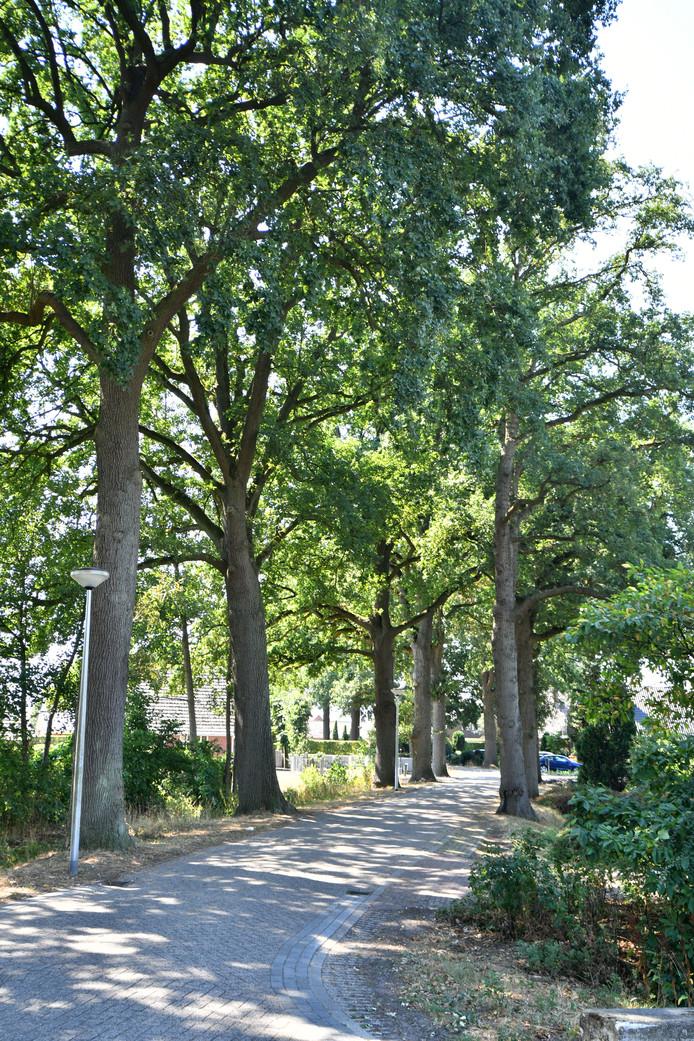 Bomen aan de Gondalaan.