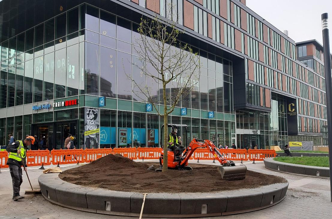 De eerste twee bomen worden geplant.