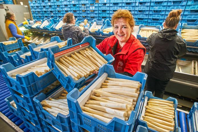 Sandra de Wit tussen de asperges in het sorteercentrum bij De Wit Asperges in Mariah