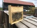 De bijen zijn druk aan het werk.